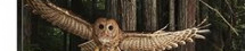 cropped-owl.jpg